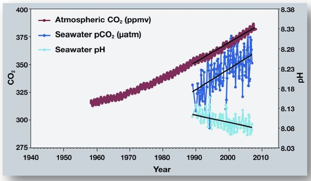 Correlation of CO2 in atmosphere, seawater and seawater pH (acidity)